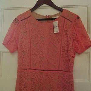 Miss Selfridge lace dress brand new